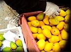 水果玩整容:看青芒果如何变身金芒果